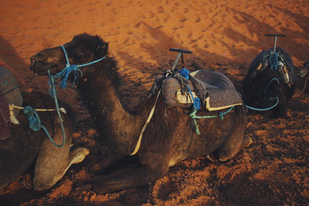 Sahara Desert Guide Merzouga Morocco