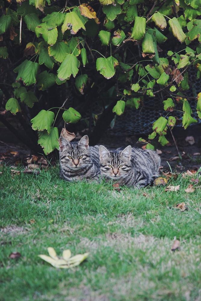 Ruhe - Finde deinen Happy Place willascherrybomb katzen garten