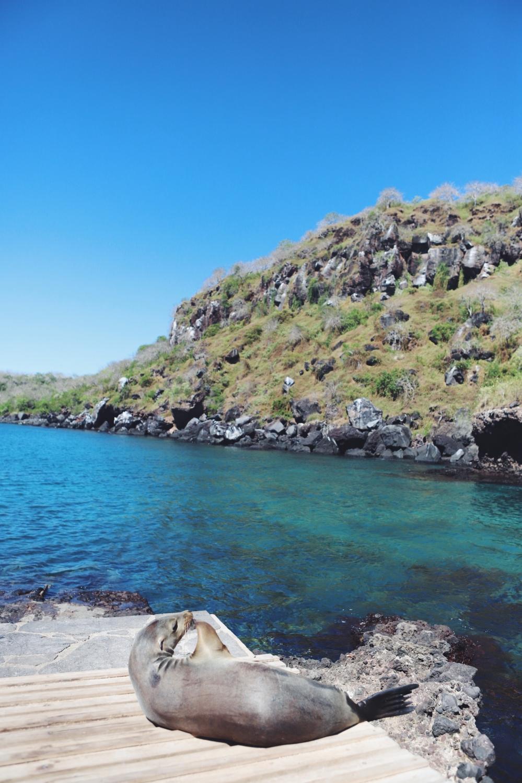 Galapagos on a Budget: San Cristobal - Alles was du wissen musst! - willascherrybomb - yvonne karnath