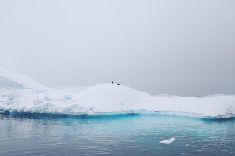 Antarktis on a Budget - So kannst du den siebten Kontinent bereisen - willascherrybomb - yvonne karnath