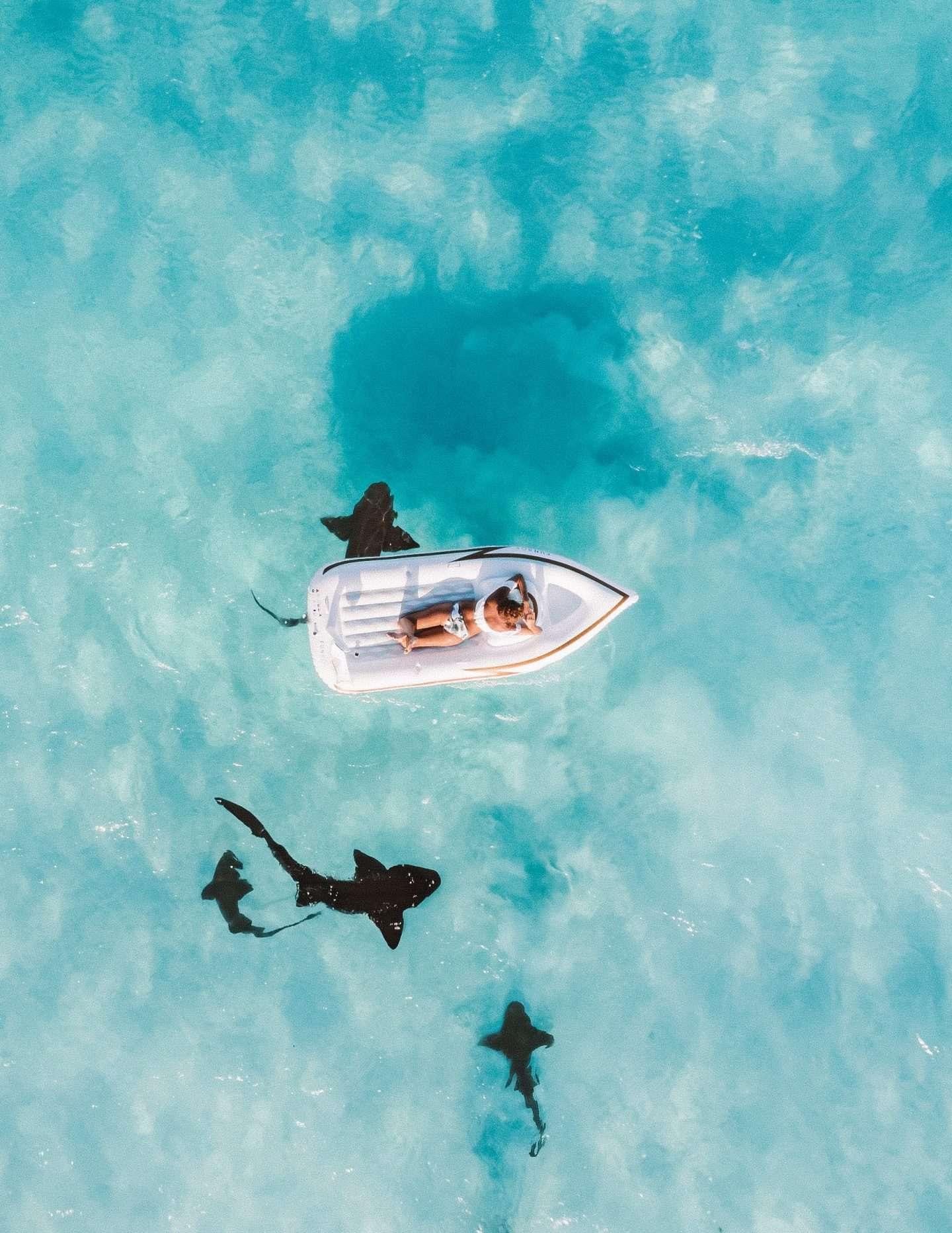 Frau in Boot umringt von Haien im Urlaub