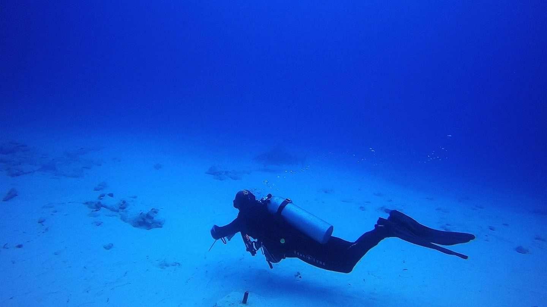 Tauchen mit Bullenhaien – Alles was du wissen musst!